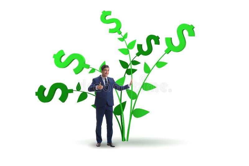 Het concept van de geldboom met zakenman in het kweken van winsten stock foto