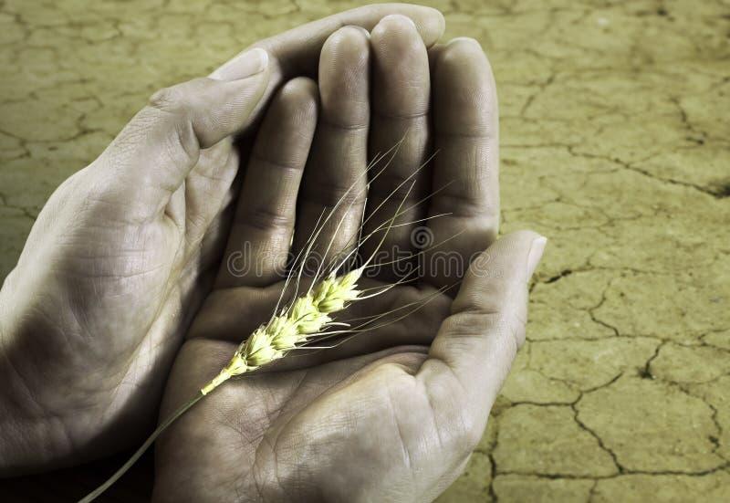 Het concept van de honger op de aarde en het geven handen royalty-vrije stock fotografie