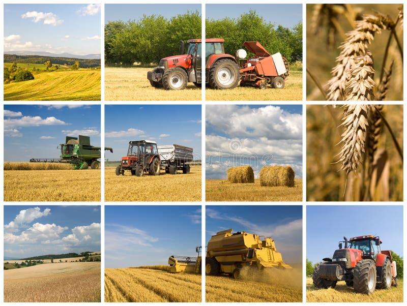 Het concept van de landbouw royalty-vrije stock fotografie