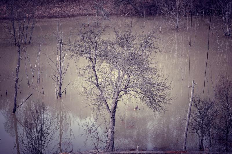 Het concept van de mijnbouw Het sterven aard, vegetatie stock afbeeldingen