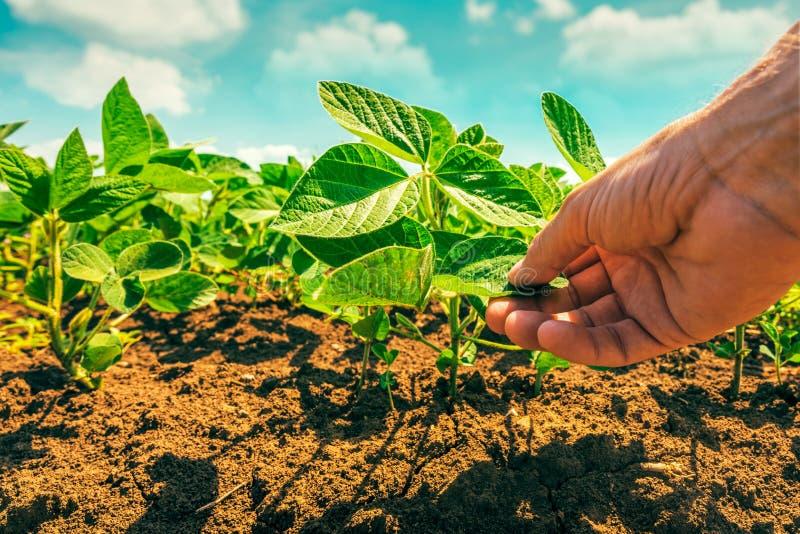Het concept van de sojaboongewasbescherming royalty-vrije stock afbeelding