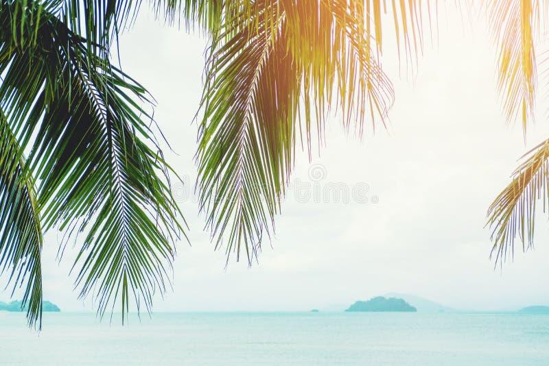 Het concept van de het strandzomer van de kokosnotenpalm stock afbeeldingen