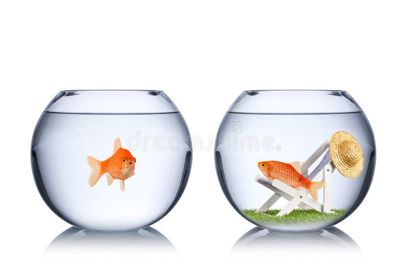 Het concept van de vissenvakantie stock afbeelding