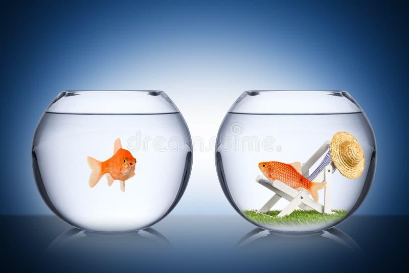 Het concept van de vissenvakantie royalty-vrije stock fotografie