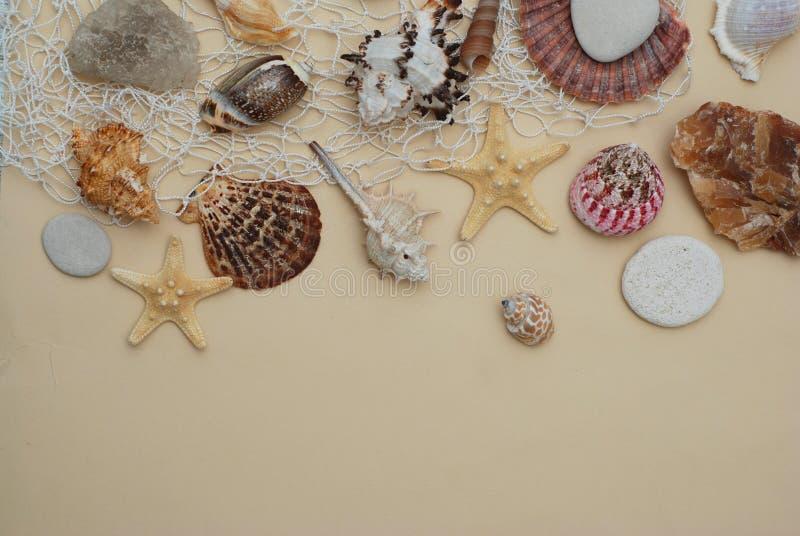 Het concept van de zomer en van de vakantie Mengeling van Shells en Stenen over Ivoorachtergrond met Exemplaarruimte voor Tekst H stock afbeeldingen