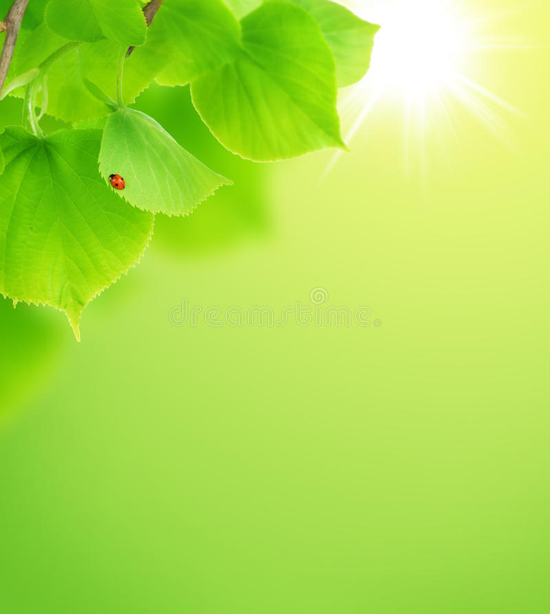 Het Concept van de zomer/van de Lente stock afbeeldingen