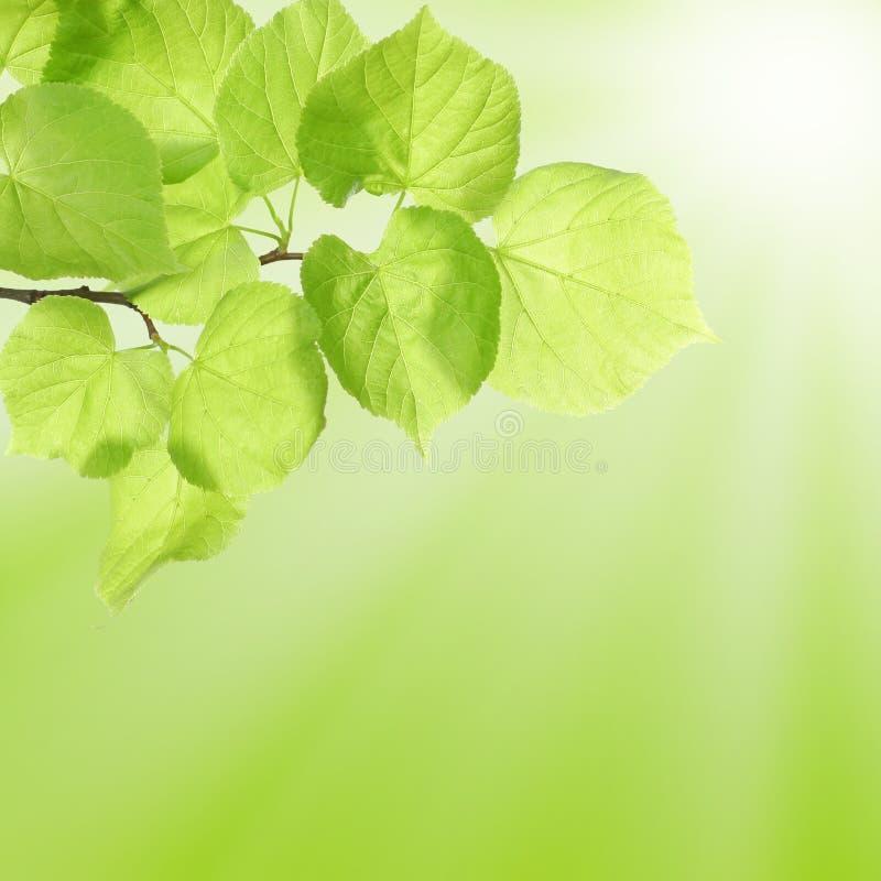 Het Concept van de zomer of van de Lente met Groene Bladeren stock foto's