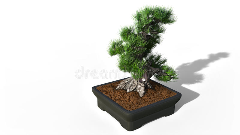 het 3d teruggeven Bonsai stock illustratie