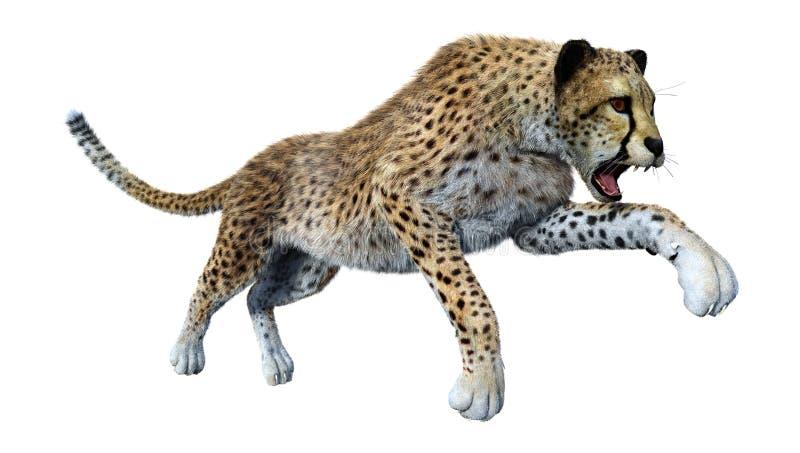 het 3D Teruggeven Grote Cat Cheetah op Wit royalty-vrije illustratie