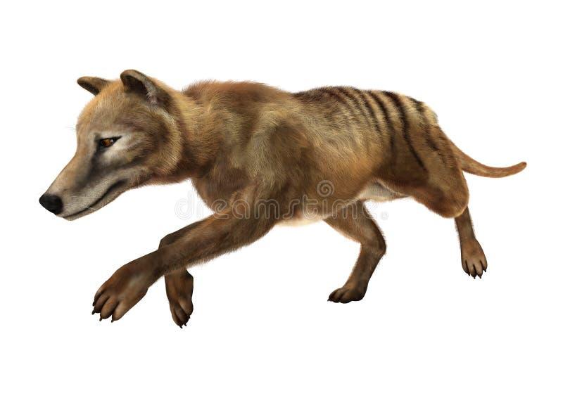 het 3D Teruggeven Thylacine op Wit vector illustratie