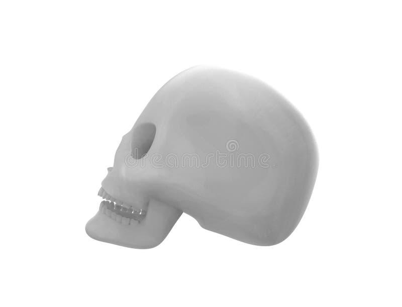 het 3D teruggeven van een schedel op witte achtergrond wordt ge?soleerd die vector illustratie