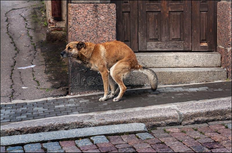 Het dagelijkse leven van een hond royalty-vrije stock afbeelding