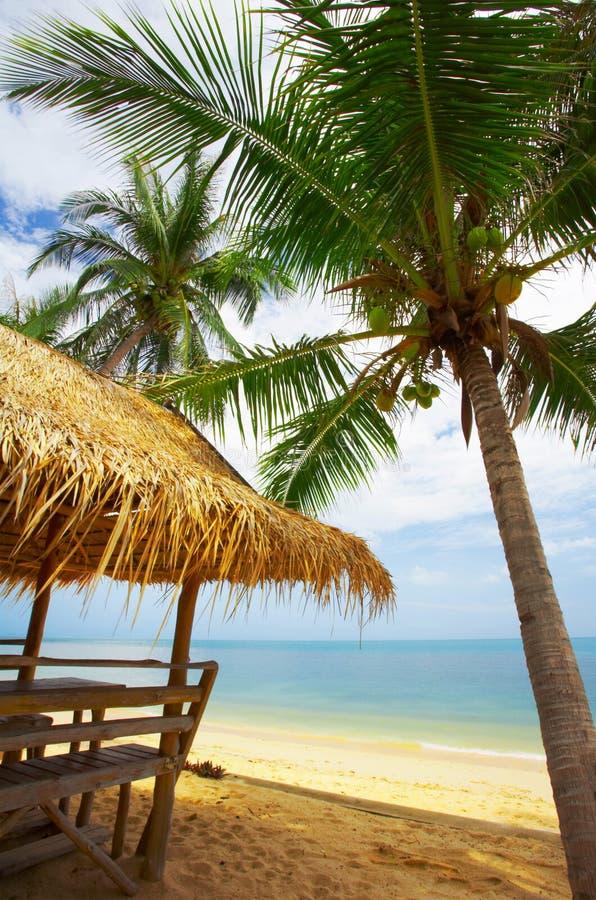 Het dak van de kokosnoot stock afbeelding
