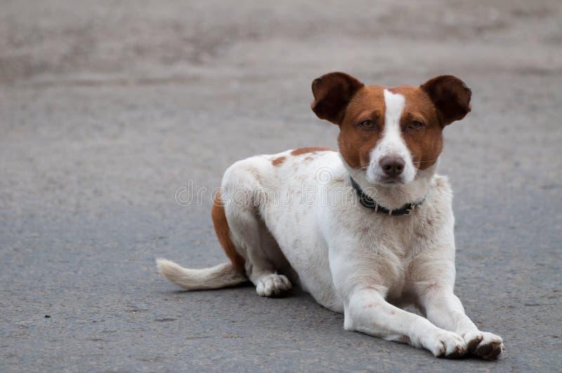 Het dakloze aandachtige hond vooruitzien royalty-vrije stock afbeelding