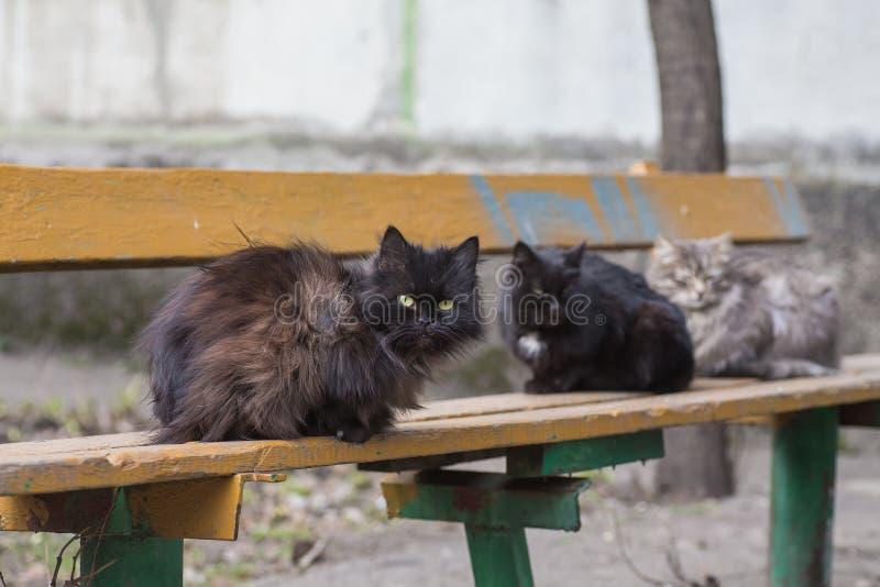 Het dakloze straat hongerige kat vinden stock foto