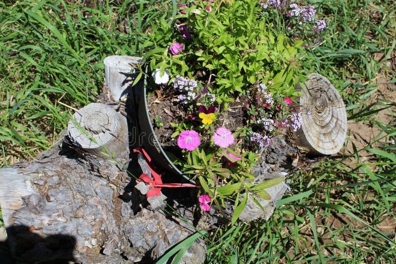 Het damast nam Magnoliophyta-bloempot B toe royalty-vrije stock foto's