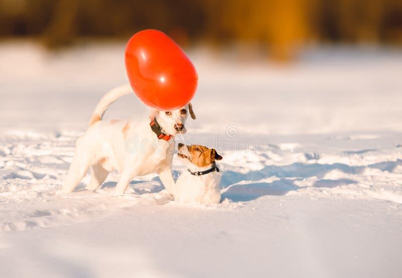 Het de dagconcept van Valentine met honden koppelt en rode hart-vormige ballon op sneeuw bij aardige Februari-dag royalty-vrije stock foto