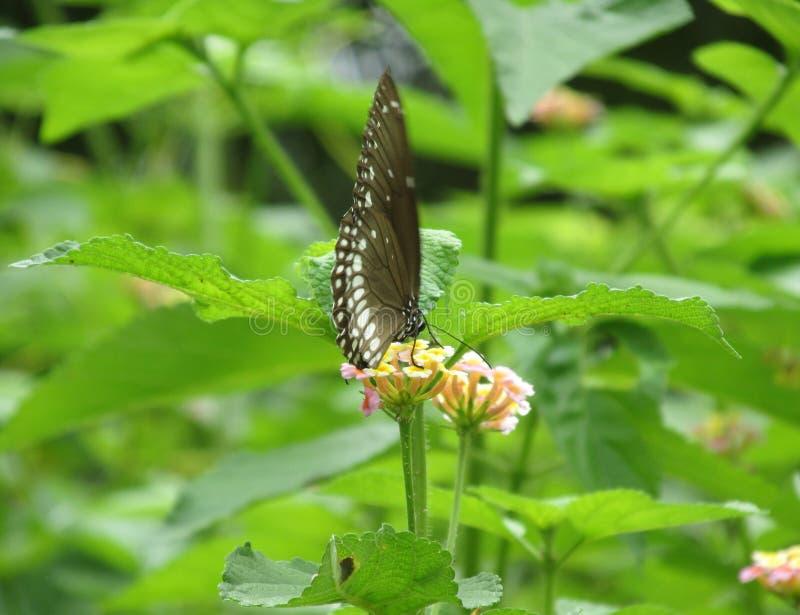 Het de Fotografiewild van de vlinder buetifull aard royalty-vrije stock afbeelding
