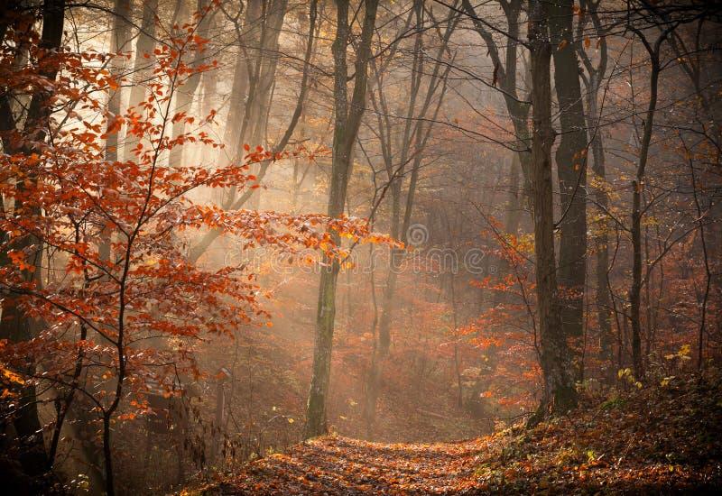 Het de herfstbos royalty-vrije stock afbeeldingen