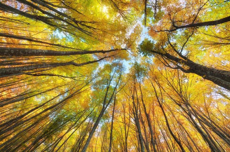 In het de herfstbos royalty-vrije stock afbeelding