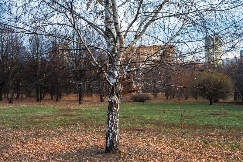 Het de herfstlandschap in een bewolkte avond is volledig van melancholie Eenzame bomen met het vernietigen van gebladerte in het  stock foto's