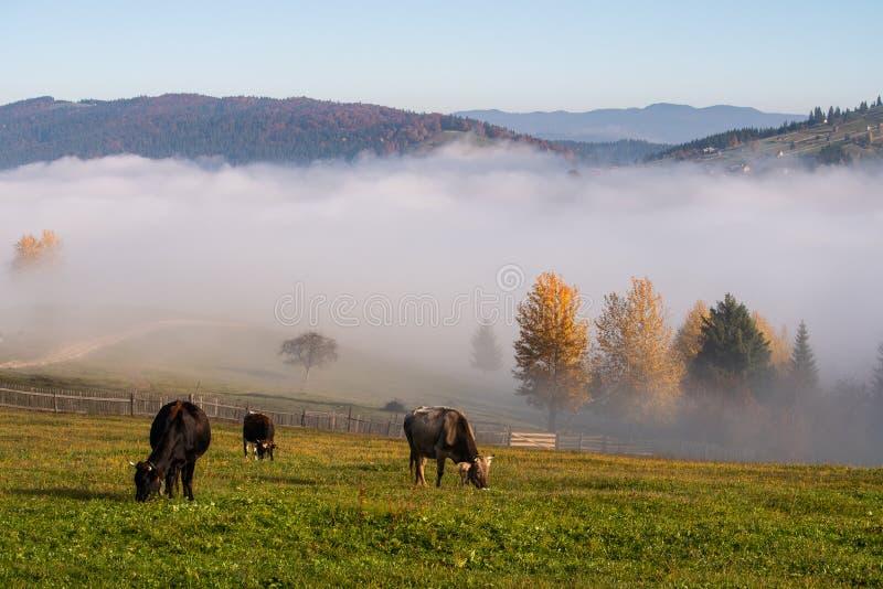 Het de herfstlandschap van het Bucovinadorp in Roemenië met krast en mist stock afbeelding