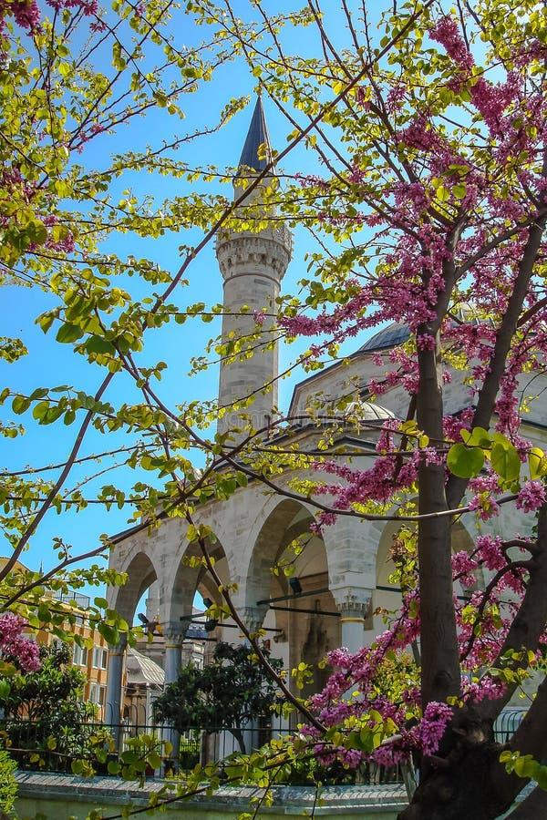 Het de Lentelandschap in Istanboel royalty-vrije stock fotografie