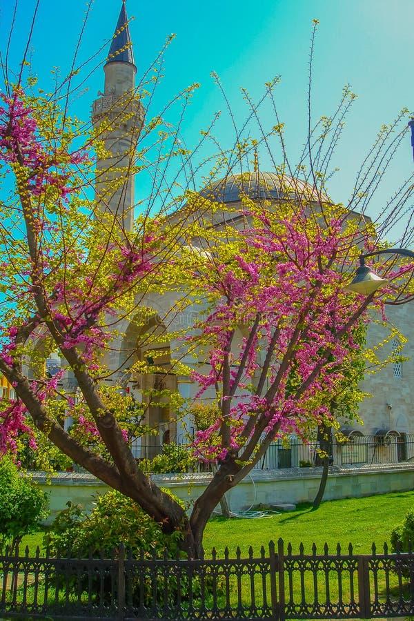 Het de Lentelandschap in Istanboel stock foto