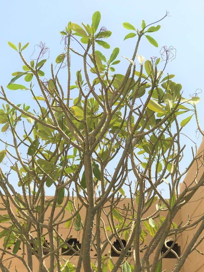 Het is de Lentetijd aardige boom & blauwe hemel royalty-vrije stock fotografie