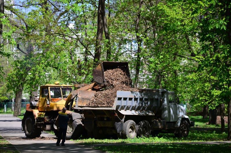 Het de stadsverbetering team verwijdert de gevallen bladeren in het park met een graafwerktuig en een vrachtwagen Het regelmatige royalty-vrije stock foto's
