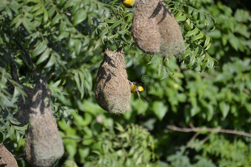 Het de vogelbouw nest stock afbeelding