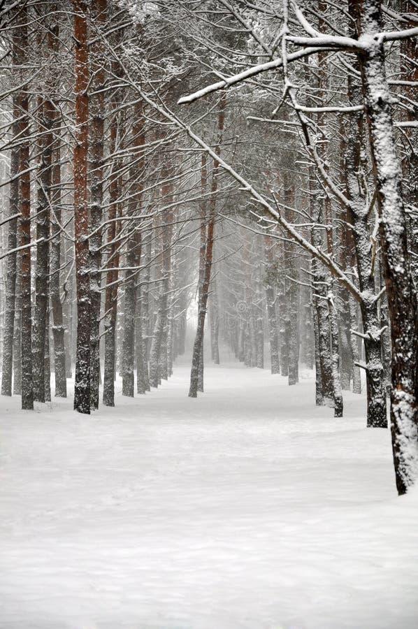 Het de winterbos stock foto