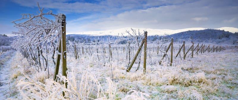 Het de winterlandschap met vorst en sneeuw behandelde bomen en aard van Karpatische bergen dichtbij Bratislava, Slowakije royalty-vrije stock afbeeldingen