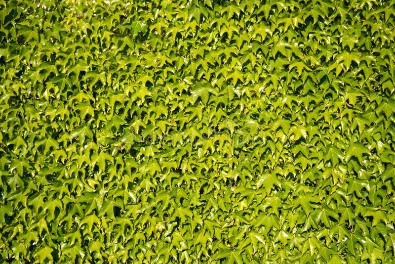 Het decor van de Ecomuur met groene installaties stock foto
