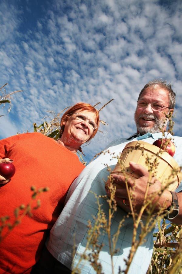 Het delen van appelen royalty-vrije stock foto's