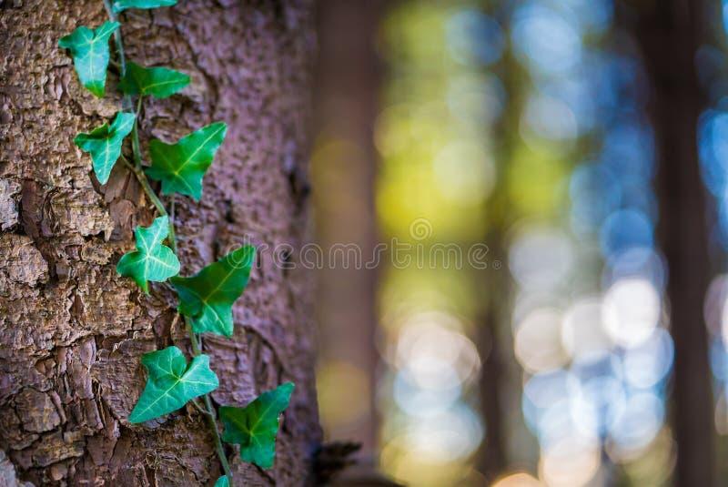 Het detail schoot groene weelderige bosboom stock afbeelding