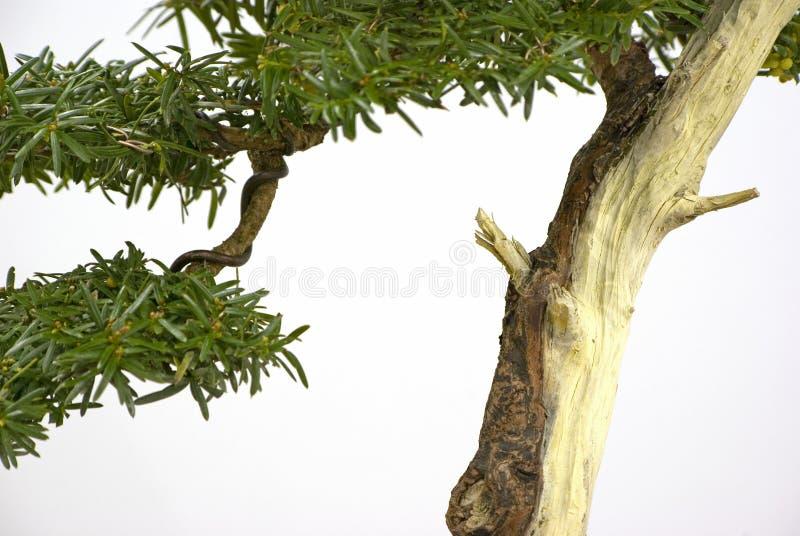 Het detail van de bonsai royalty-vrije stock fotografie