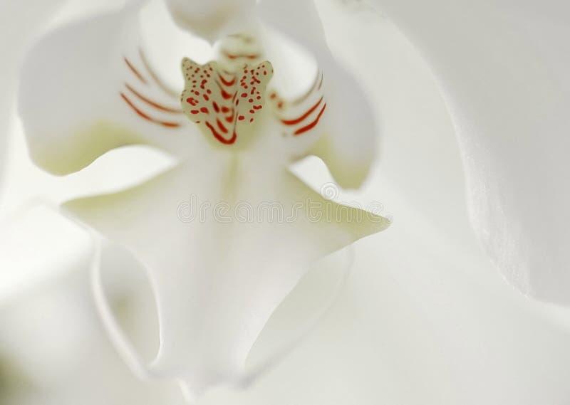 Het Detail van de orchidee royalty-vrije stock afbeelding