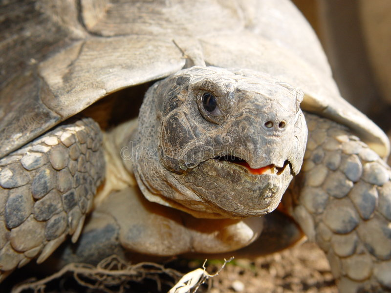 Het Detail van de schildpad stock afbeelding