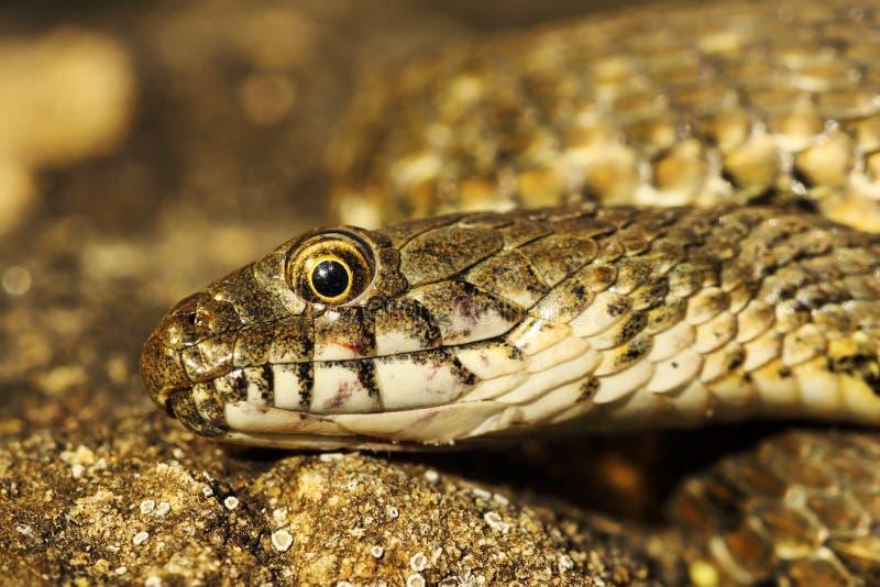 Het detail van dobbelt slanghoofd stock foto
