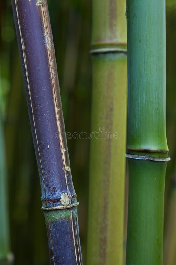 Het detail van het bamboe stock afbeeldingen