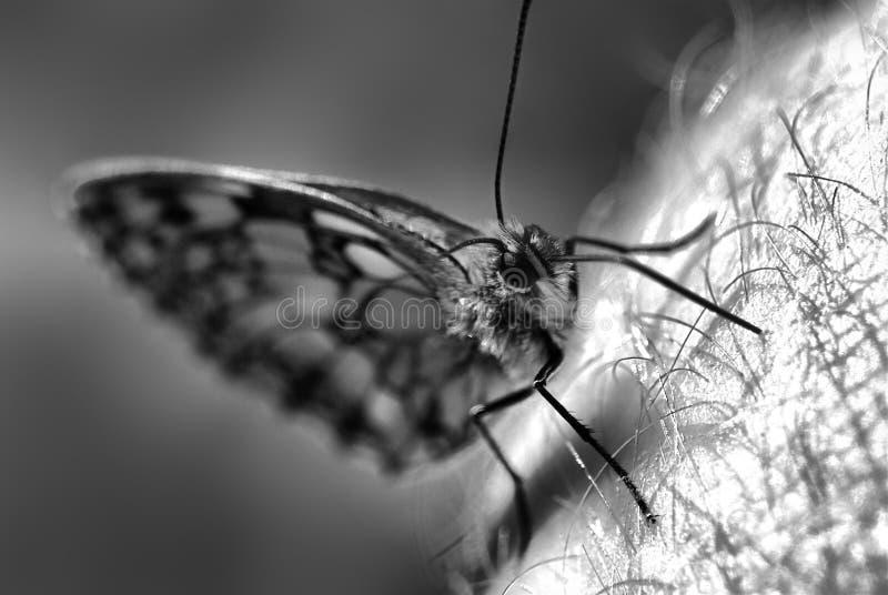 Het detail van vlinder stock foto