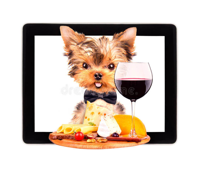 Het dienblad van de hondholding met voedsel op tablet royalty-vrije stock afbeelding