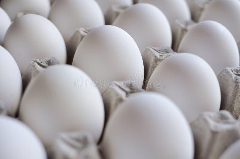 Het Dienblad van eieren stock foto