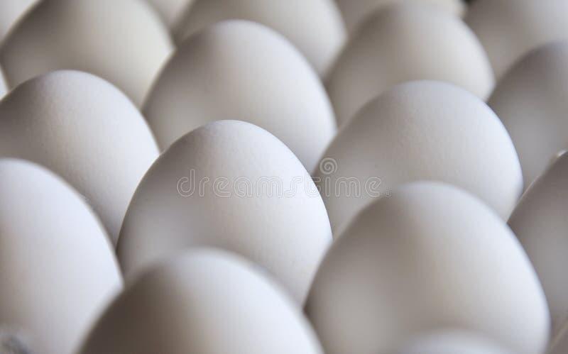 Het Dienblad van eieren stock foto's