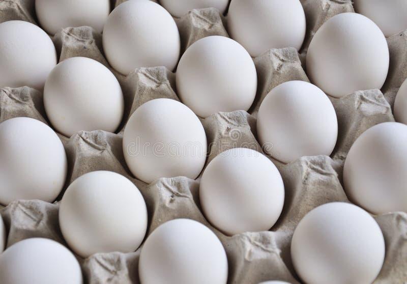 Het Dienblad van het ei royalty-vrije stock foto