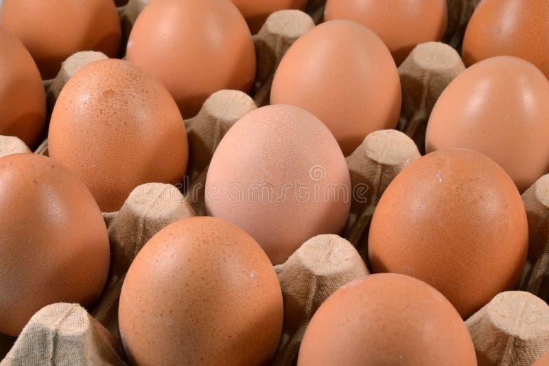 Het karton van het ei met eieren. stock foto