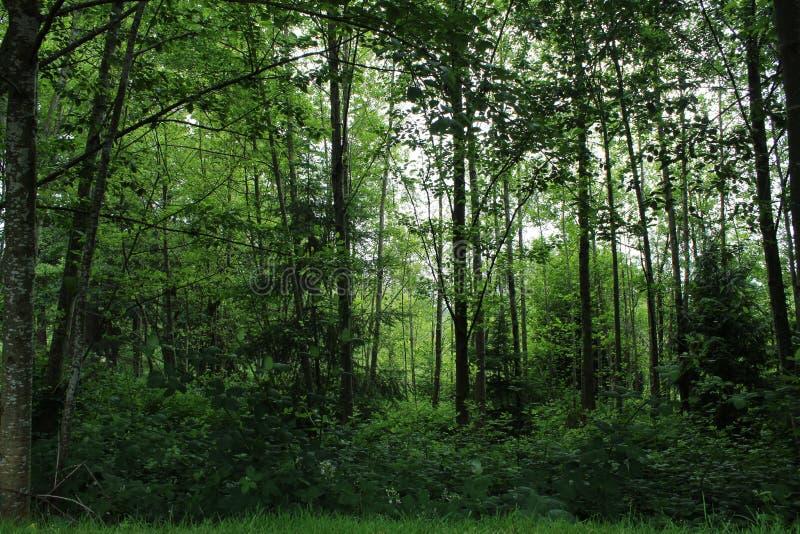 Het diepe weelderige groene bos van Washington royalty-vrije stock afbeeldingen