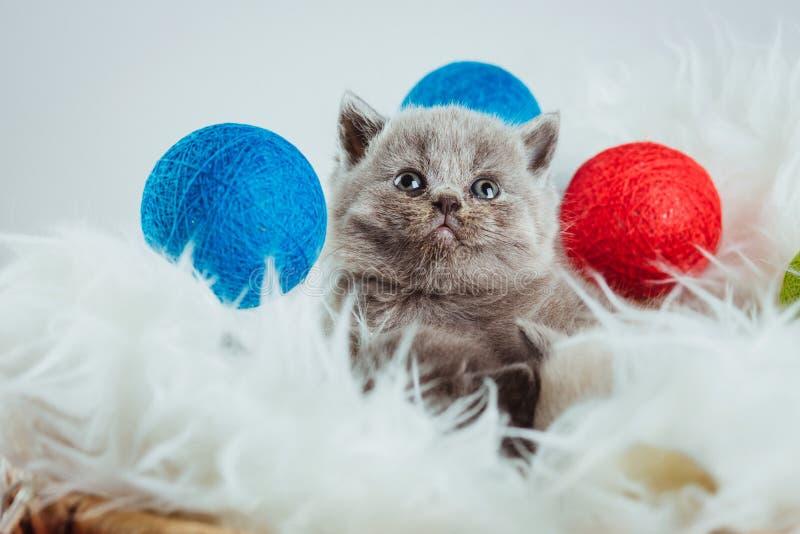 Het dier van de katjes babys kat stock afbeelding