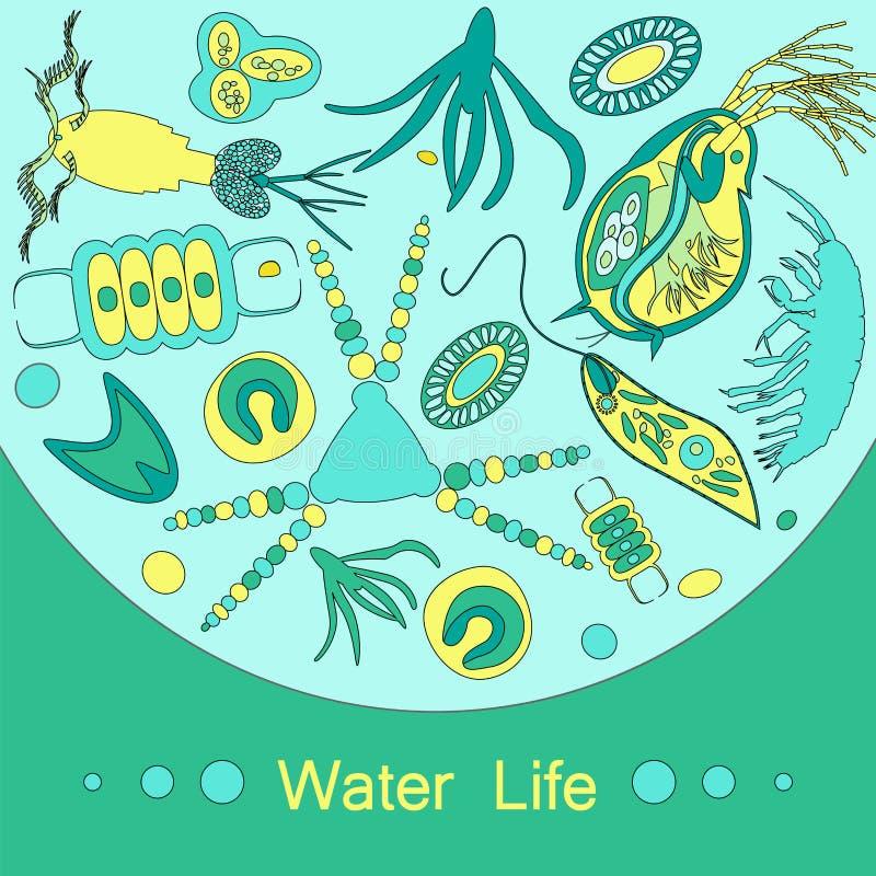 Het dierlijk planktonoverzicht van het planktonfytoplankton stock illustratie